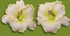 Multi-bloom side image